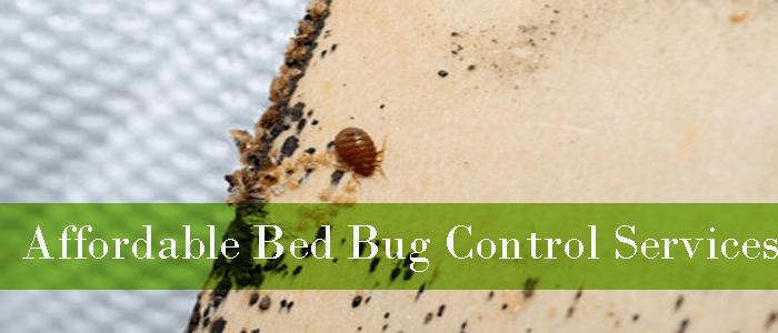 Affordable Bed Bug Control Inglewood
