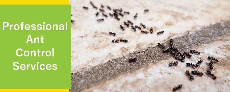 Professional Ant Control Inglewood