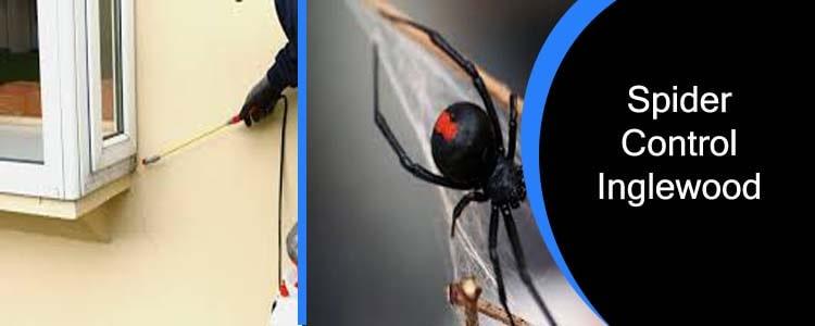 Spider Control Inglewood