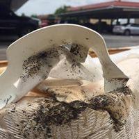 Ant Control Inglewood