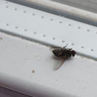 Fly Pest Control Inglewood